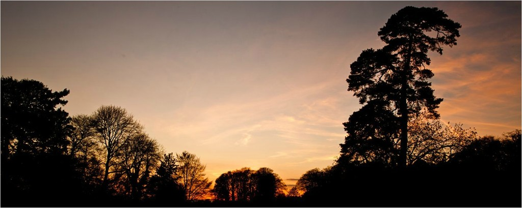 Image :: tree silhouettes