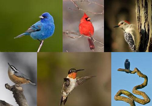 • Bird Compilation •