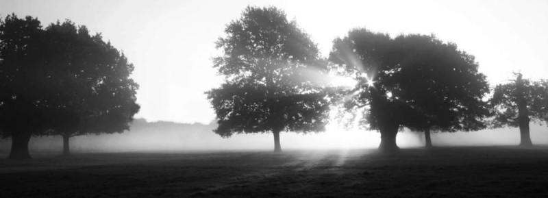 Misty Morning • Look for light shafts